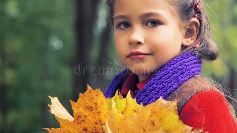 Portrait d'automne de la gentille petite fille dans le manteau rouge Dans des ses mains un bouquet d'érable jaune part Jour ensol photo stock
