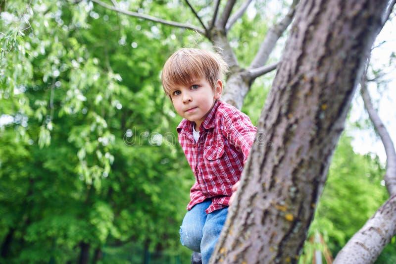 Portrait d'ext?rieur du gar?on pr?scolaire mignon grimpant ? un arbre photographie stock