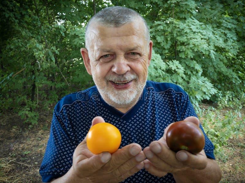 Portrait d'homme supérieur prenant deux types différents de tomate images stock