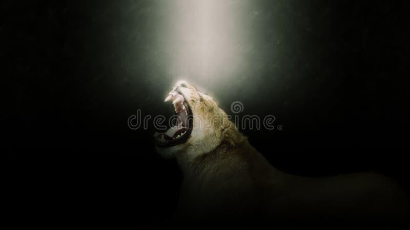 Portrait d'hurlement de lion photo libre de droits