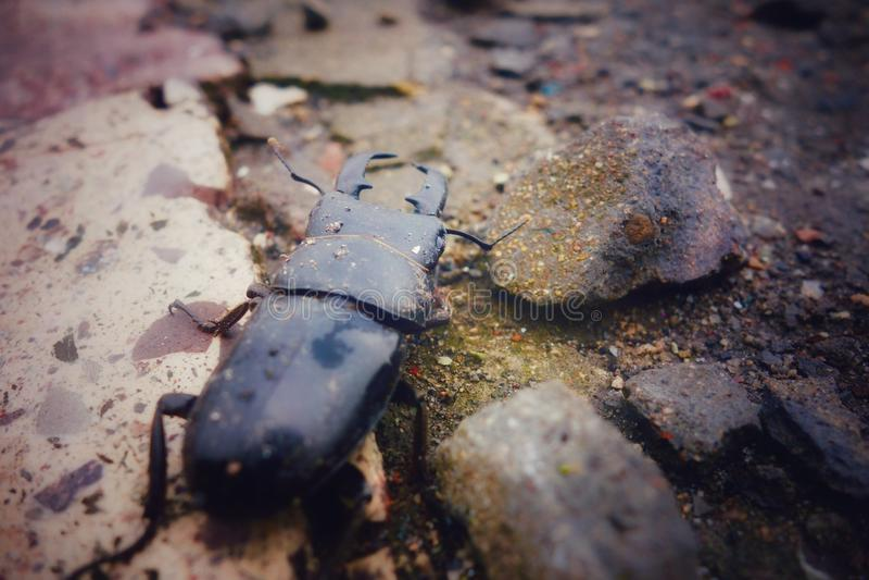 Portrait d'insecte images libres de droits