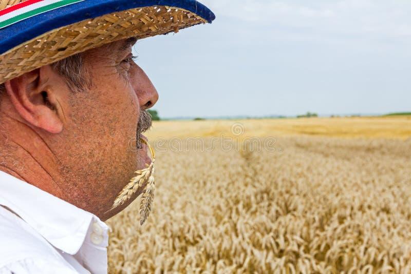 Portrait d'un agriculteur supérieur photographie stock