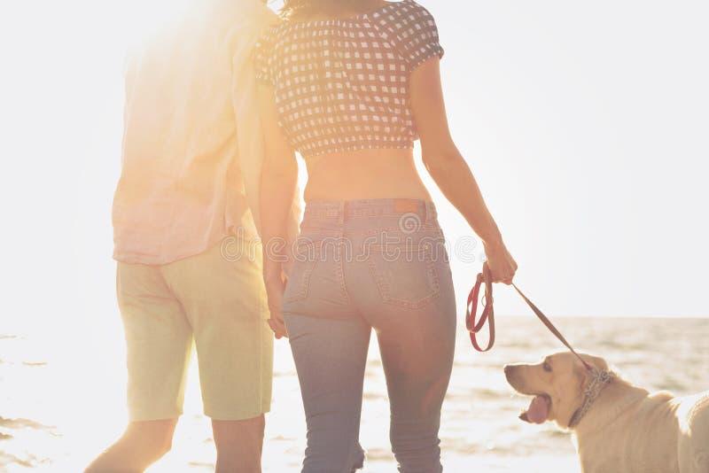 Portrait d'un ajouter heureux aux chiens à la plage images stock