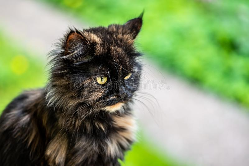 Portrait d'un beau chat sur un fond brouill? Fin vers le haut image stock