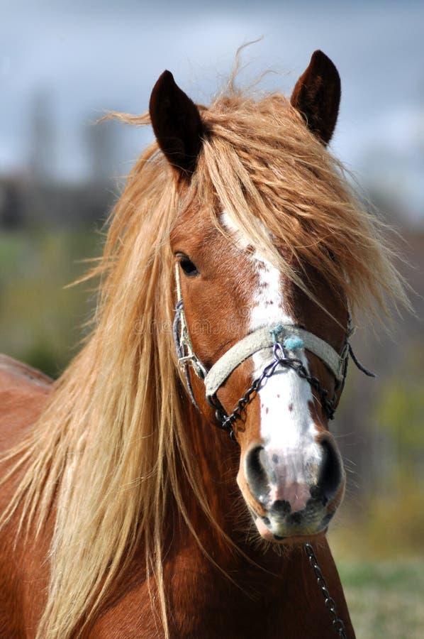 Portrait d'un beau cheval photographie stock libre de droits