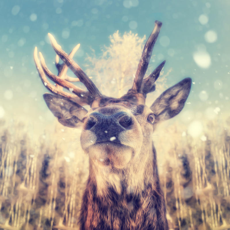 Portrait d'un cerf commun photographie stock
