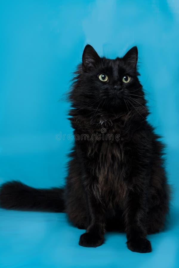 Portrait d'un chat noir avec un fond bleu photographie stock