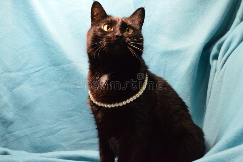 Portrait d'un chat noir dans des perles de perle sur un fond bleu photo stock
