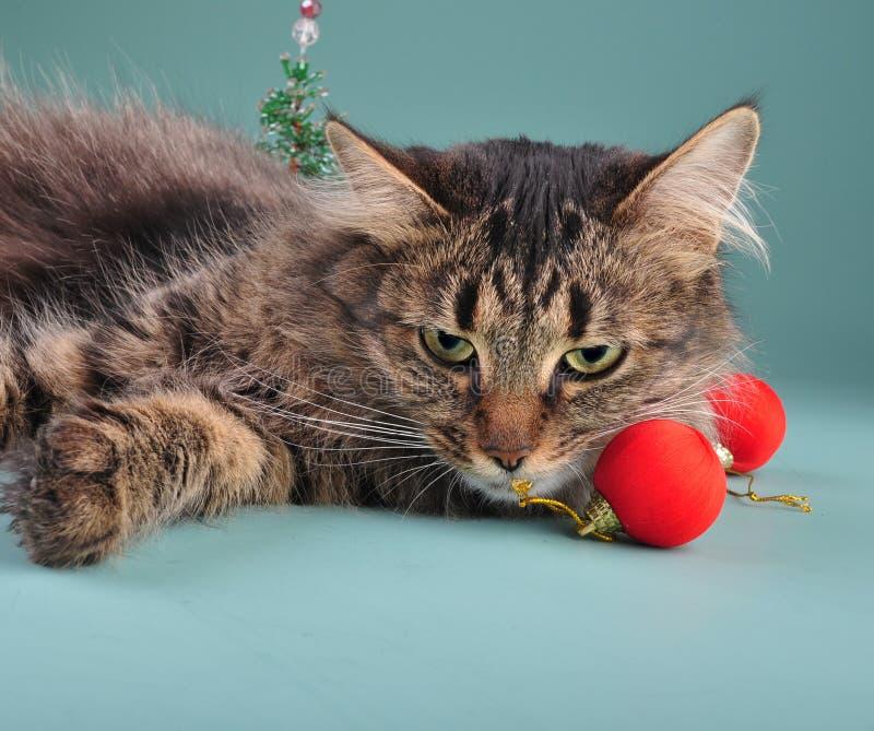 Portrait d'un chat parmi la substance de Noël photos stock