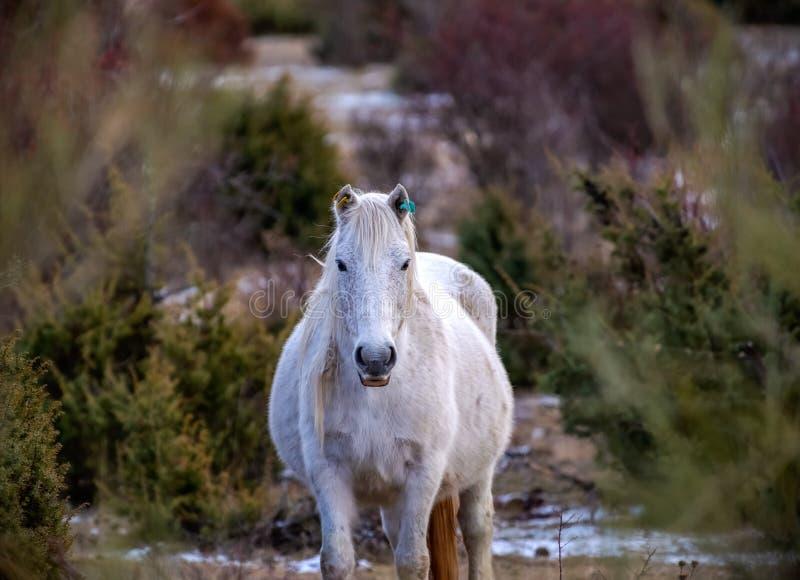 Portrait d'un cheval blanc dehors un jour nuageux photo libre de droits