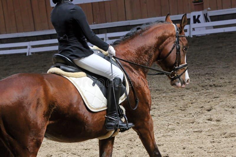Portrait d'un cheval de sport pendant la concurrence de dressage sous la selle photos stock