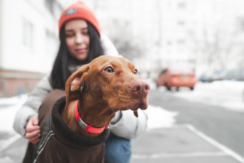 Portrait d'un chien brun mignon sur la rue regardant le fond d'une jeune femme le tenant image stock