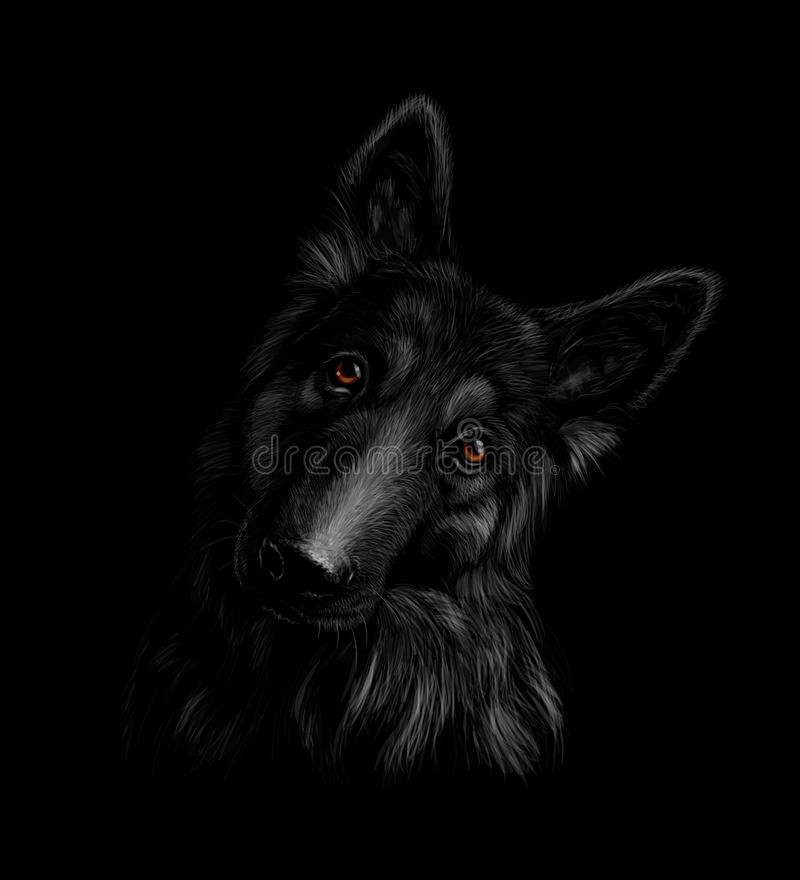 Portrait d'un chien de berger allemand sur un fond noir illustration de vecteur