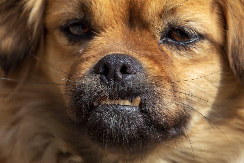 Portrait d'un chien pendant l'après-midi photo libre de droits