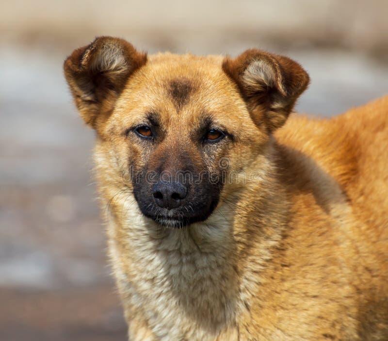 Portrait d'un chien pendant l'après-midi photo stock