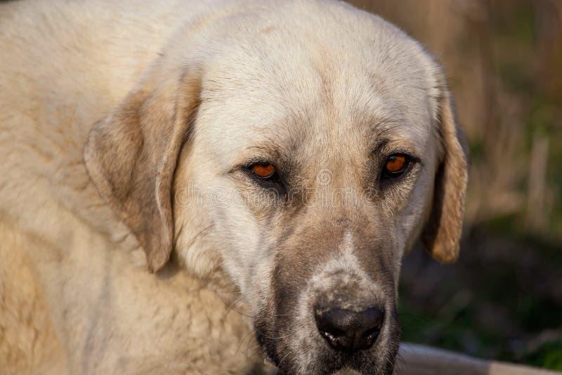 Portrait d'un chien pendant l'après-midi images libres de droits