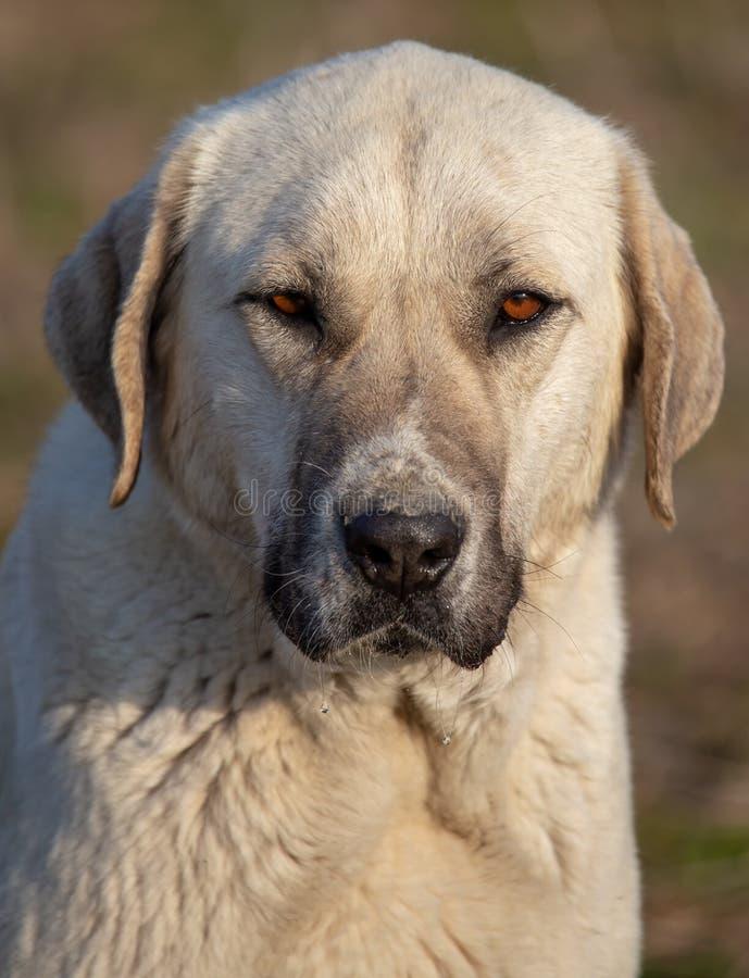 Portrait d'un chien pendant l'apr?s-midi photographie stock libre de droits