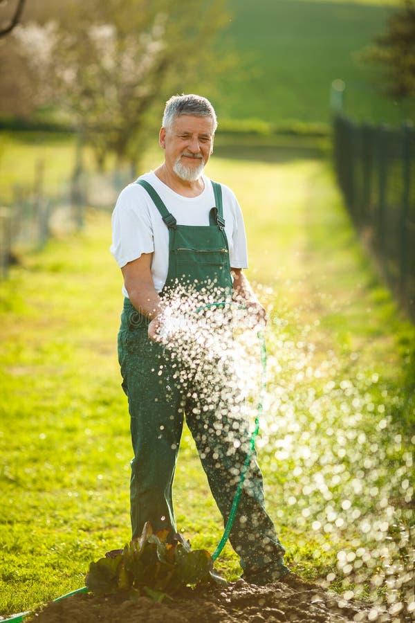 Portrait d'un homme supérieur bel faisant du jardinage dans son jardin images stock