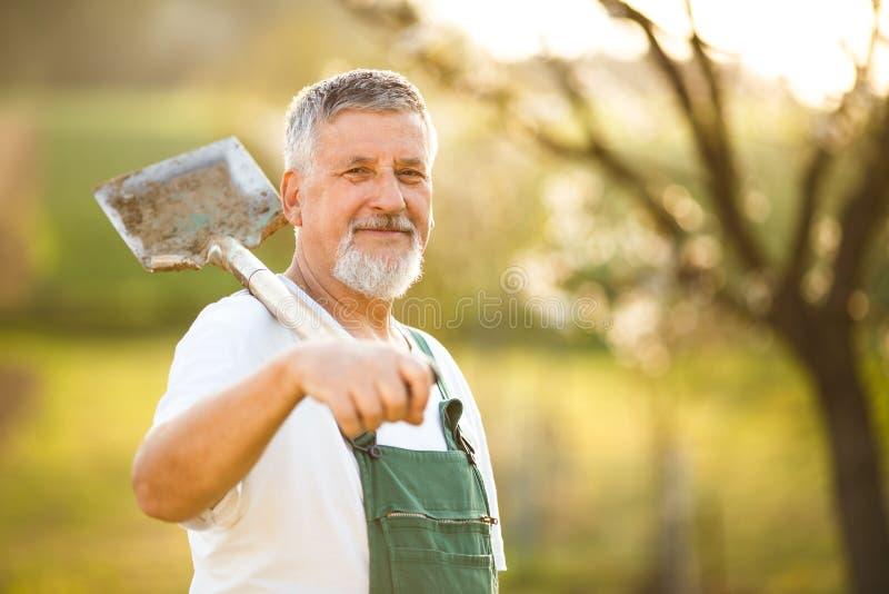 Portrait d'un homme supérieur bel faisant du jardinage dans son jardin photographie stock libre de droits