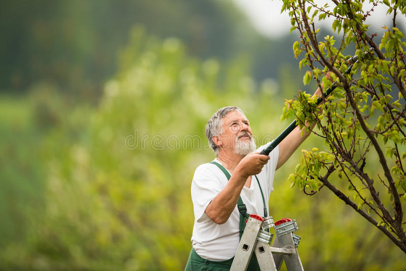 Portrait d'un homme supérieur bel faisant du jardinage dans son jardin photo libre de droits