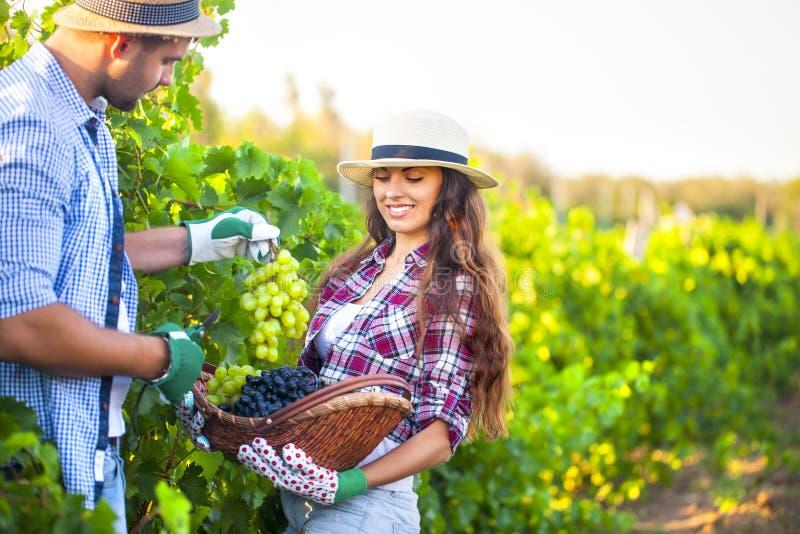 Portrait d'un jeune couple heureux dans le vignoble images stock