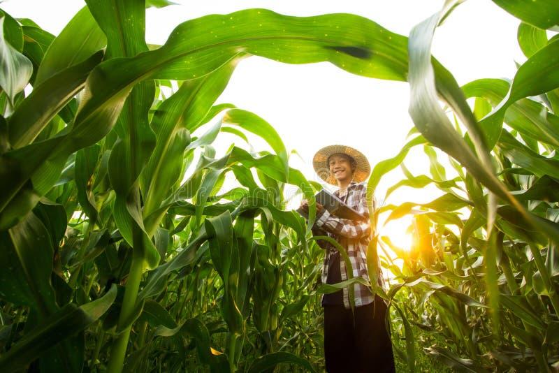 Portrait d'un jeune exploitant agricole se tenant dans la ferme moyenne de maïs et souriant à l'appareil-photo photos libres de droits