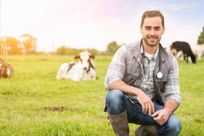 Portrait d'un jeune vétérinaire attirant dans un pâturage avec des vaches image libre de droits