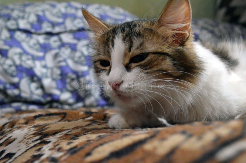 Portrait d'un joli minou photo stock