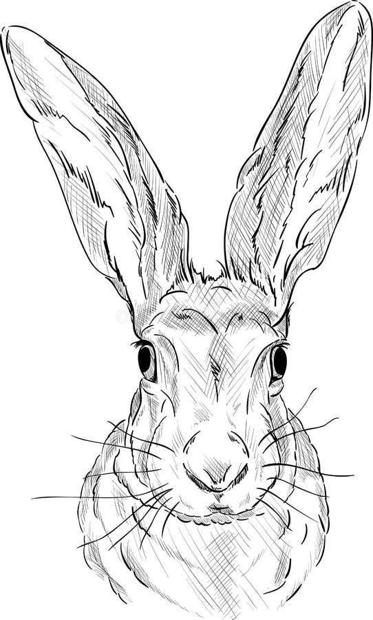 Portrait d'un lièvre illustration de vecteur