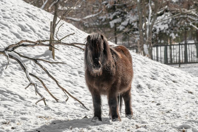 Portrait d'un poney Poney dans la campagne image stock