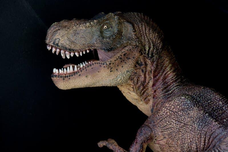 Portrait d'un rex de tyrannosaure sur le fond noir images stock