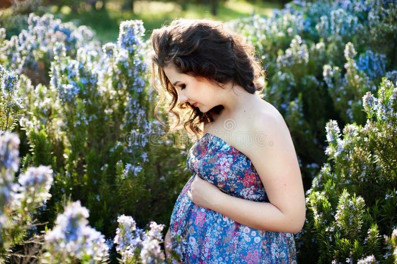 Portrait d'une femme enceinte heureuse et fière regardant son ventre en parc le lever de soleil avec une lumière arrière chaude d images stock