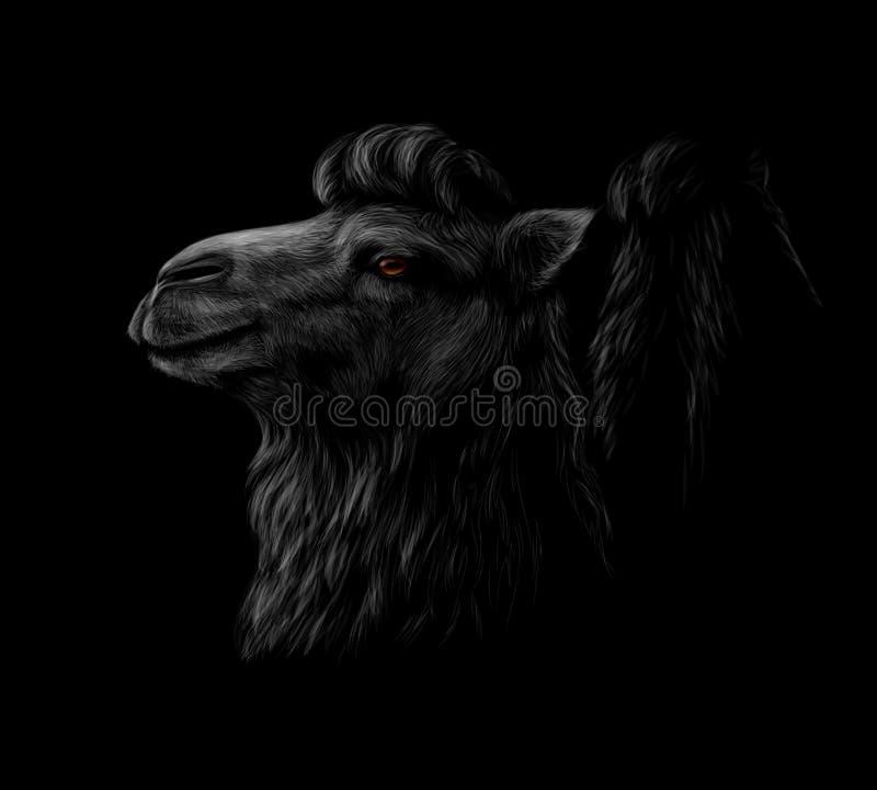 Portrait d'une tête de chameau sur un fond noir illustration libre de droits