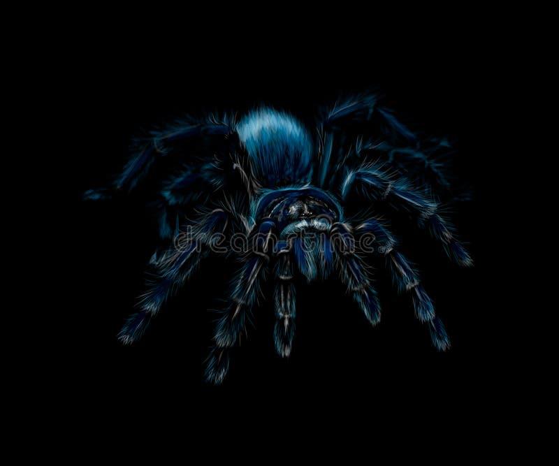 Portrait d'une tarentule Grammostola d'araignée sur un fond noir illustration stock