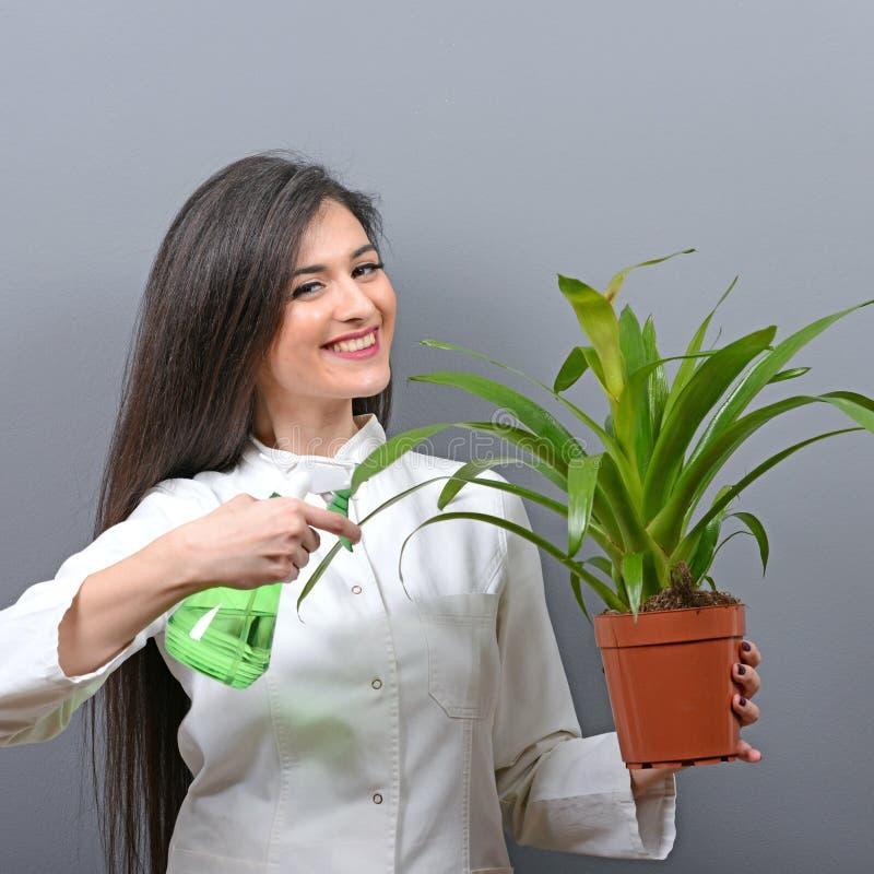 Portrait d'usine d'arrosage de botaniste de jeune femme sur le fond gris photos stock