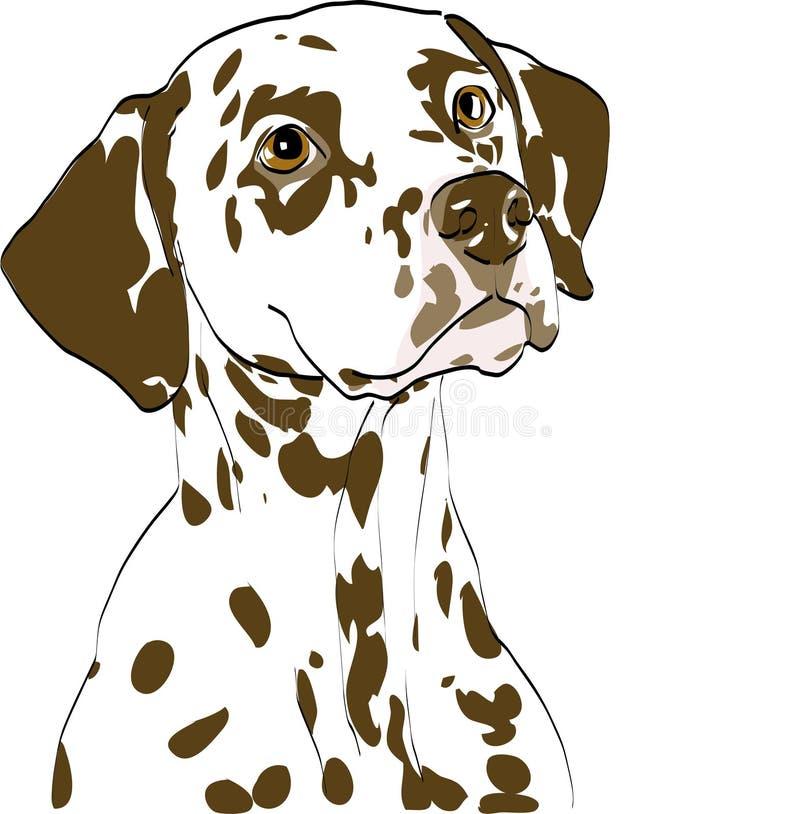 Portrait of dalmatian bitch, liver spotted