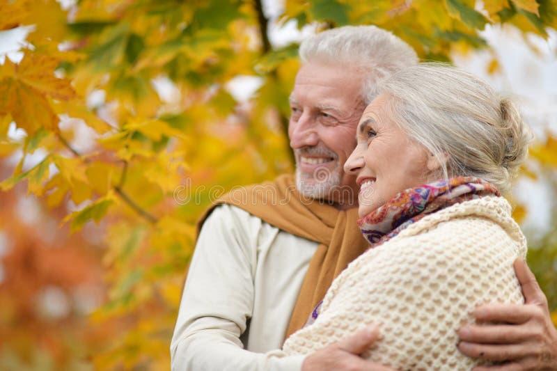 Portrait de beaux couples supérieurs étreignant en parc images stock