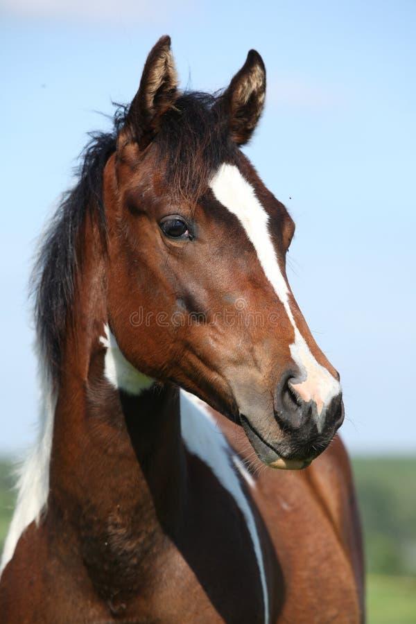 Portrait de belle jeune jument de cheval de peinture photos stock