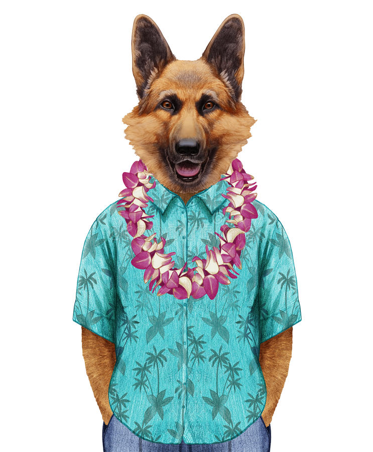 Portrait de berger allemand dans la chemise d'été avec Lei hawaïen illustration libre de droits