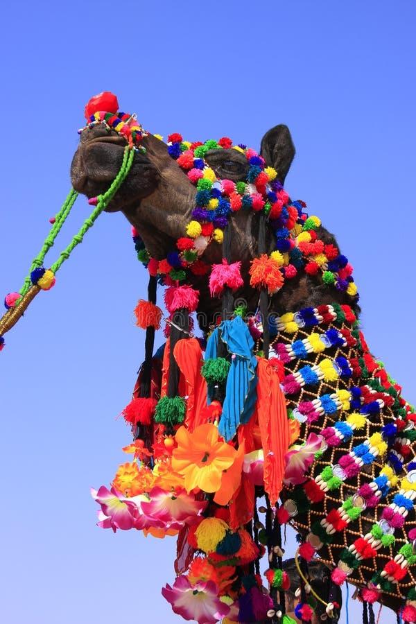 Download Portrait De Chameau Décoré Au Festival De Désert, Jaisalmer, Inde Image stock - Image du festival, traditionnel: 45359413