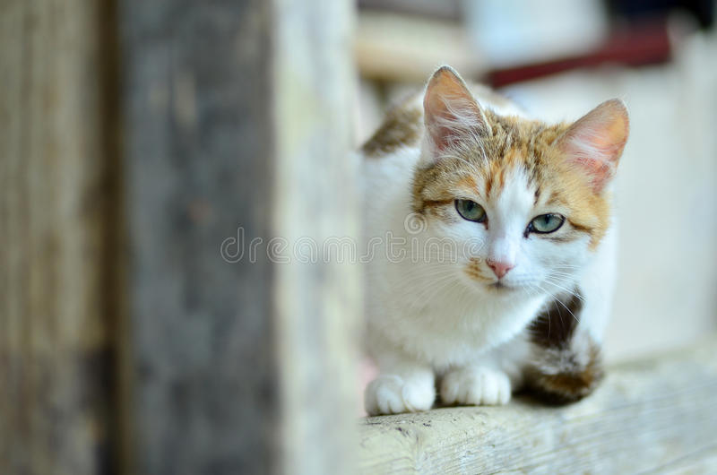 Portrait de chat photographie stock