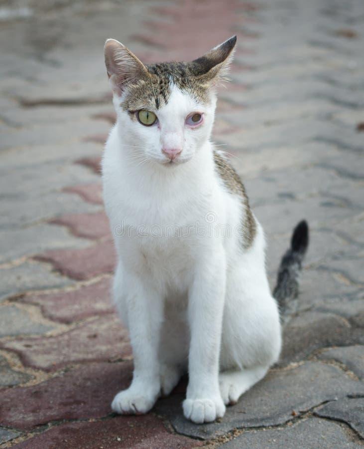 Portrait de chat blessé images libres de droits