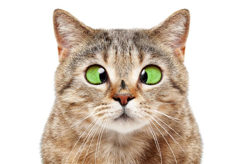 Portrait de chat drôle avec une mouche sur son nez photographie stock libre de droits