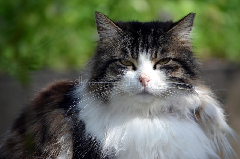 Portrait de chat fait à Istanbul, Turquie photo stock