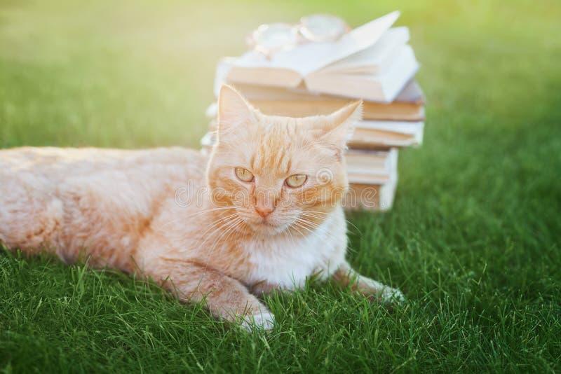 Portrait de chat mignon avec le livre photos libres de droits