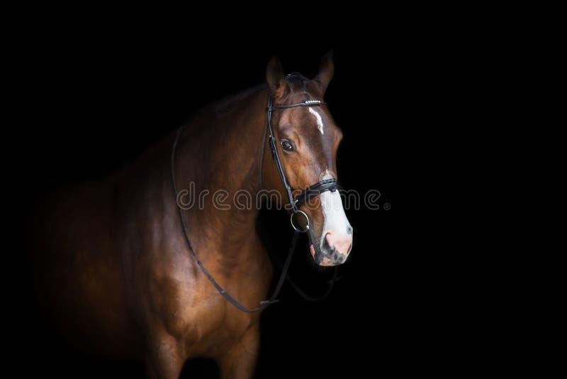 Portrait de cheval dans le frein images stock