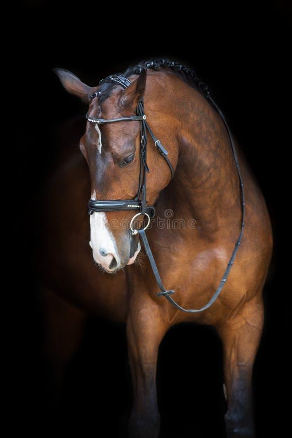 Portrait de cheval dans le frein photographie stock libre de droits