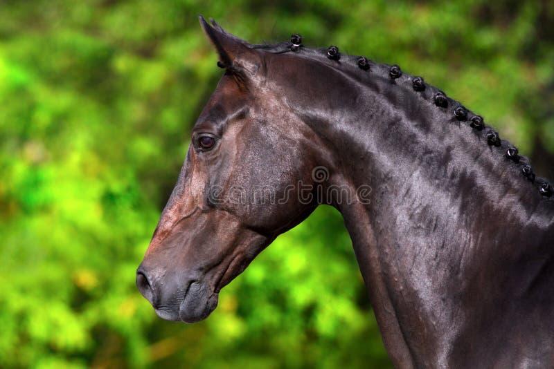 Portrait de cheval dans le mouvement photo libre de droits