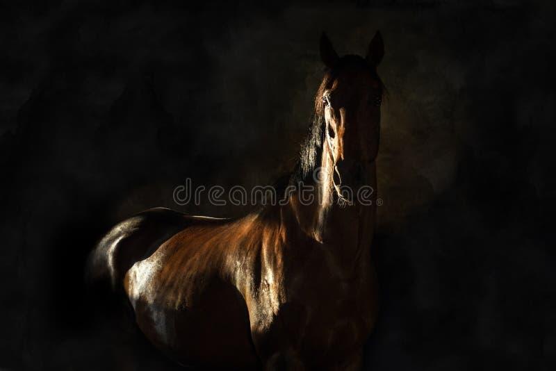 Portrait de cheval sur le noir photo stock