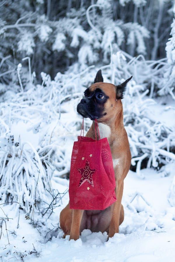 Portrait de chien à l'arrière-plan des arbres de Noël photo stock